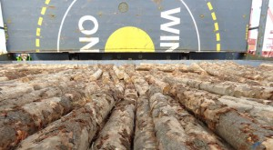 AEC Dilligence logs under deck